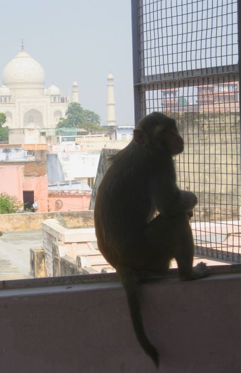 The evil monkey sits and waits...